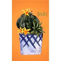 Vaso fico d'india e pianta grassa